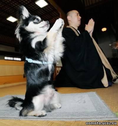 собаки и те чтят Будду